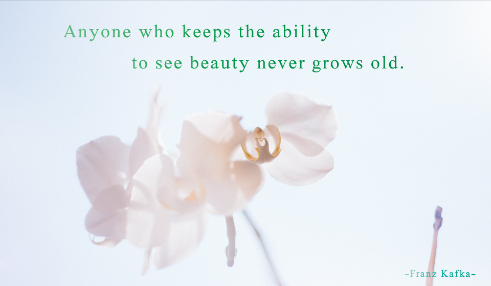Anyone who keeps the ability to see beauty never grows old. -Franz Kafka-