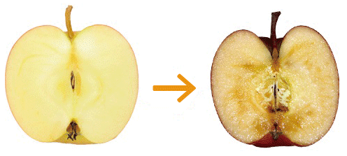 「リンゴの酸化」の画像検索結果
