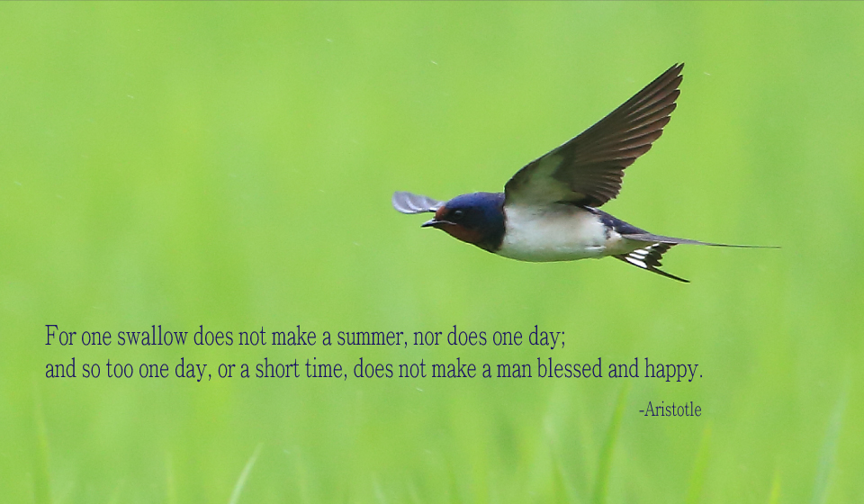 For one swallow does not make a summer, nor does one day; and so too one day, or a short time, does not make a man blessed and happy. -Aristotle